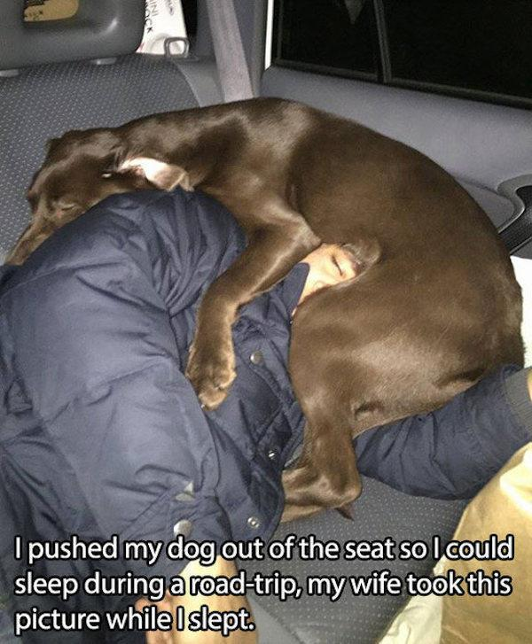 pictures-that-only-dog-lovers-will-truly-appreciate-19