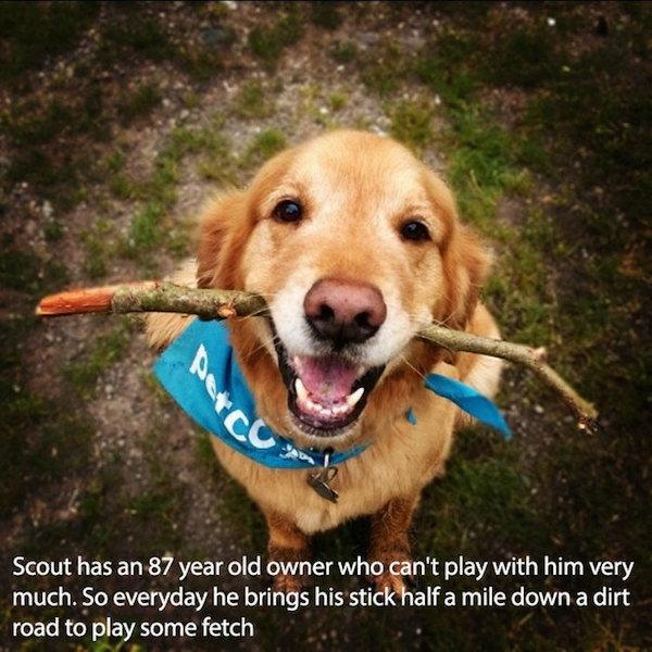 pictures-that-only-dog-lovers-will-truly-appreciate-26