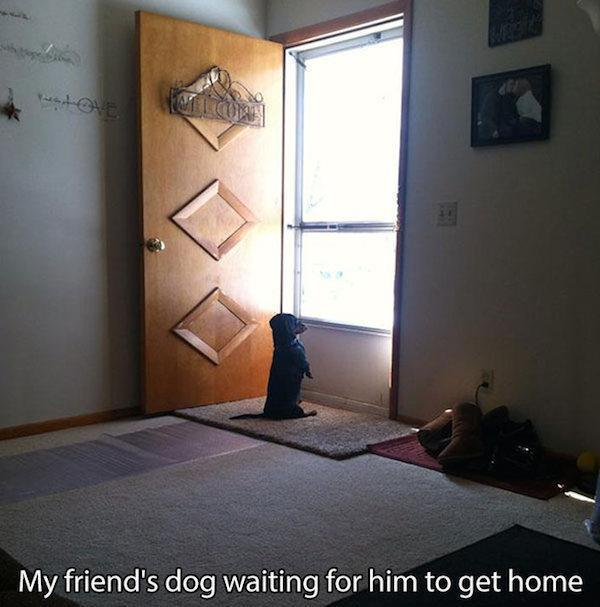 pictures-that-only-dog-lovers-will-truly-appreciate-31