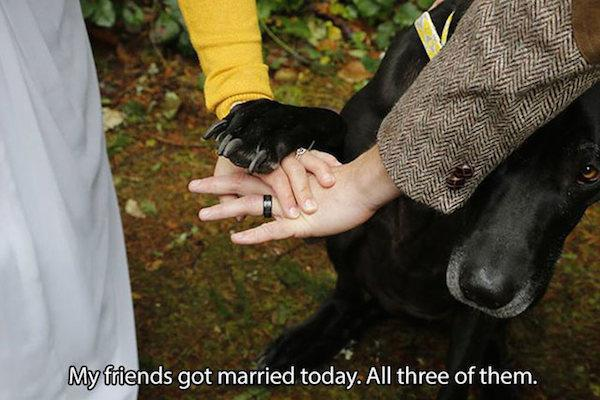 pictures-that-only-dog-lovers-will-truly-appreciate-33