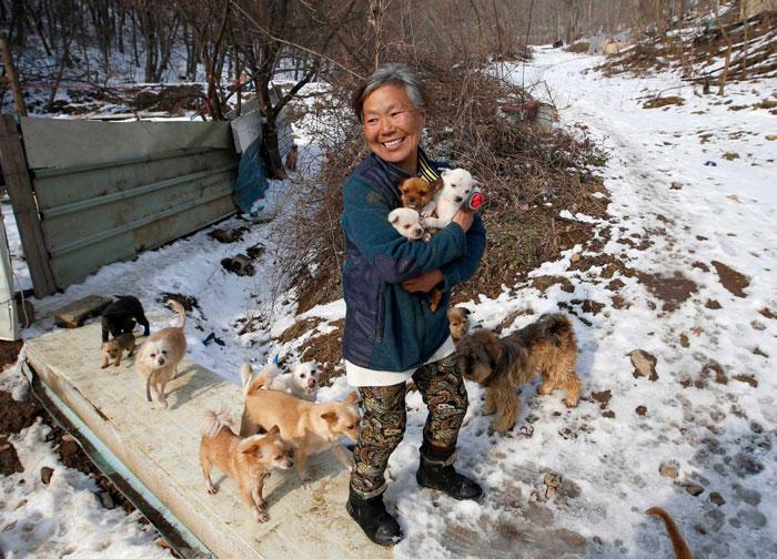 Ηλικιωμένη γυναίκα από την Νότια Κορέα μεγαλώνει τα 200 σκυλιά που έσωσε από τον θάνατο