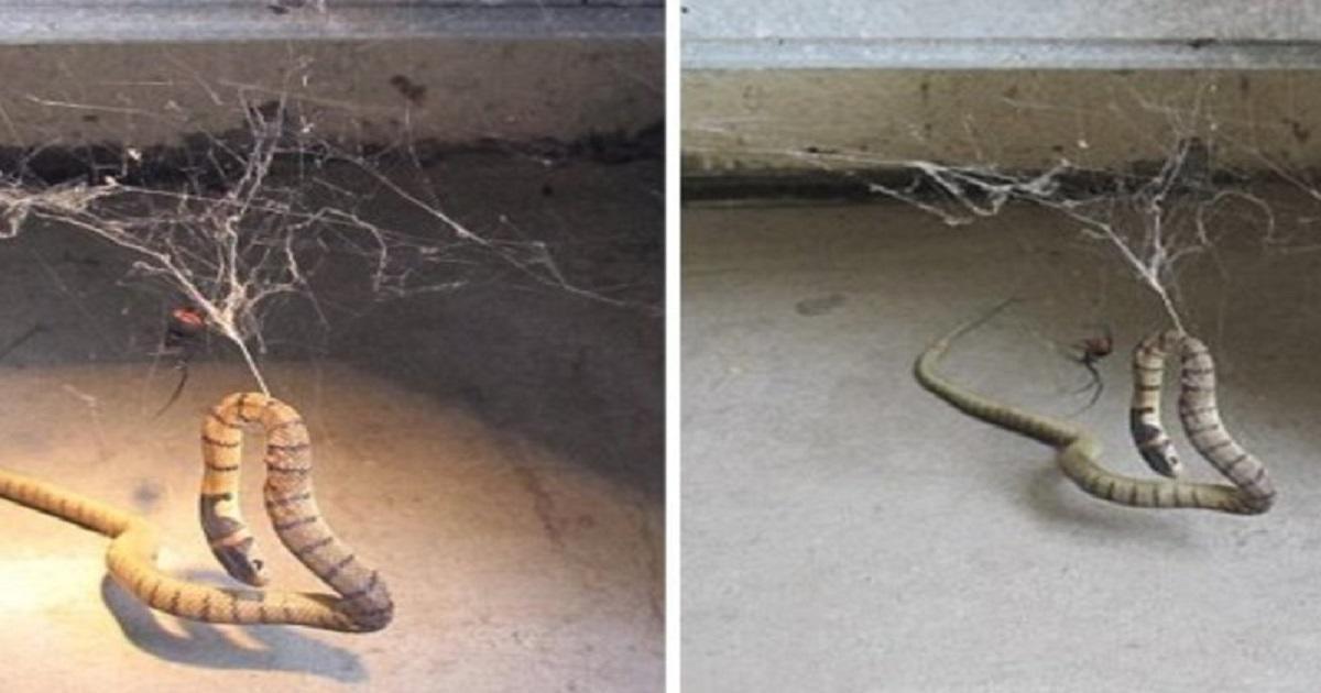 Φιλόδοξη αράχνη πιάνει στον ιστό της ένα φίδι, και αμέσως μετά όλοι οι εφιάλτες σας γίνονται πραγματικότητα.
