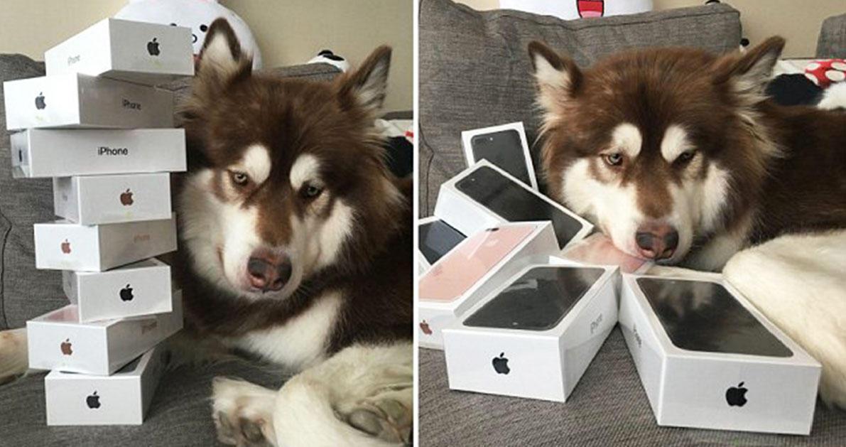 Γιος Κινέζου δισεκατομμυριούχου αγόρασε στον σκύλο του 8 συσκευές iPhone 7 για να έχει να παίζει