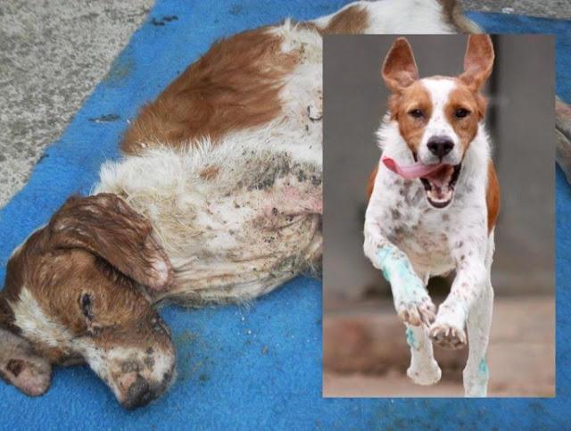 Τα κατάφερε ο σκυλάκος που αργοπέθαινε ανήμπορος κάτω από μια βάρκα στην παραλία της Αταλάντης