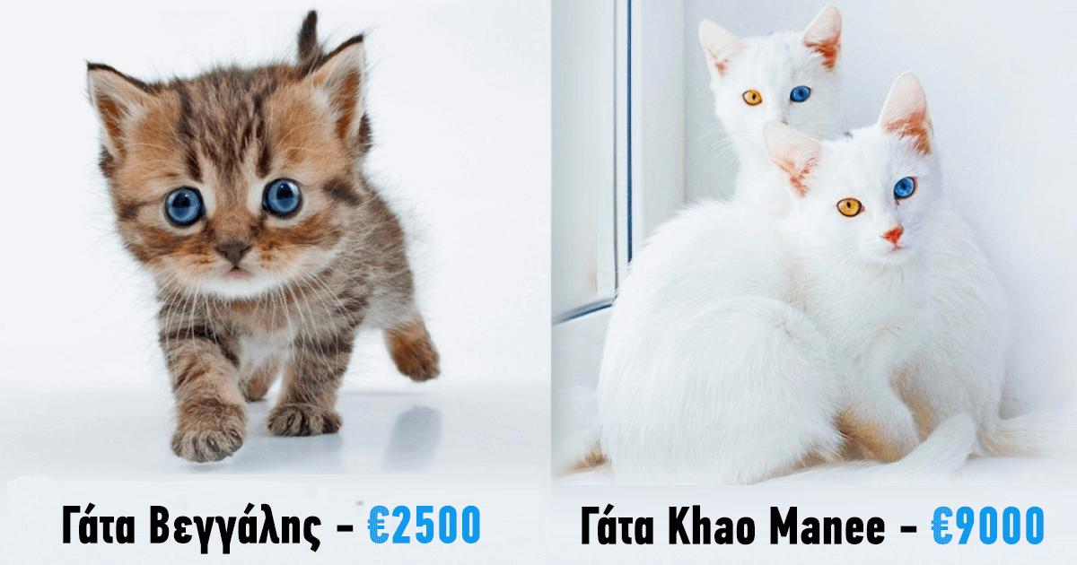 33e19fc1487a 19 γάτες πολυτελείας που θα σου κοστίσουν μια ολόκληρη περιουσία ...