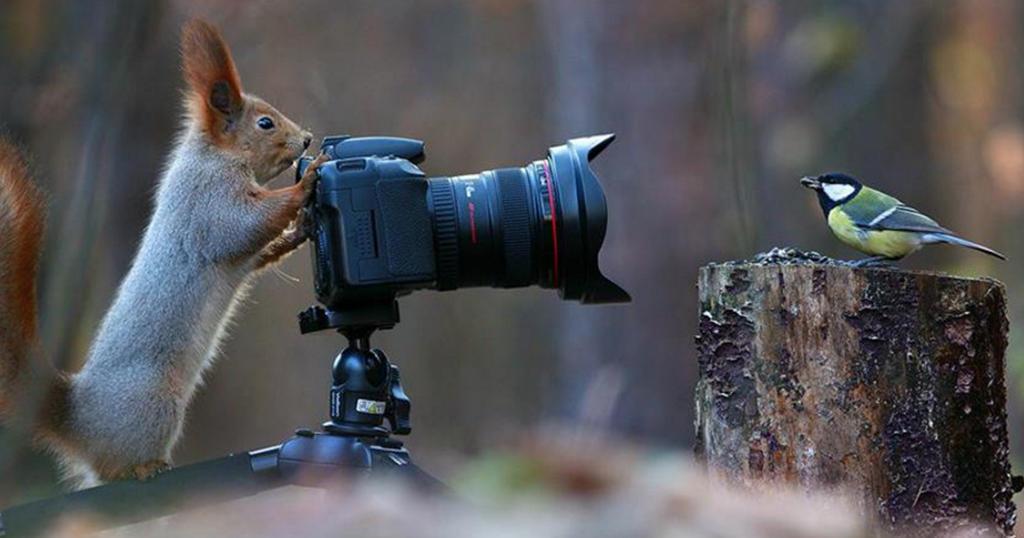 Φωτογράφος απαθανάτισε με τον φακό του την πιο αξιολάτρευτη φωτογράφιση σκίουρων που έγινε ποτέ.
