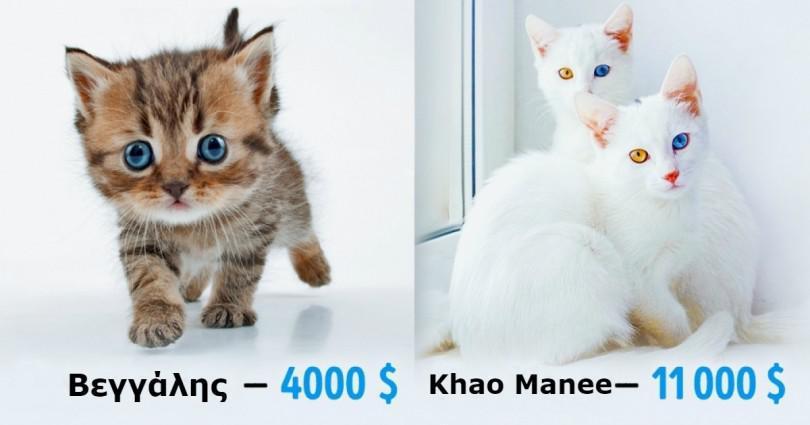 που βγαίνει με κάποιον με αλλεργίες γάτας δημοφιλείς ιστοσελίδες γνωριμιών