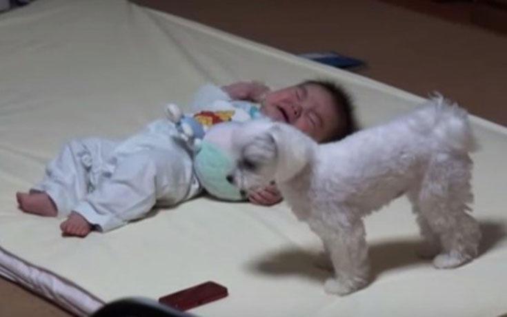 Όταν αυτό το μωρό αρχίζει να κλαίει, αναλαμβάνει την κατάσταση ο σκύλος…