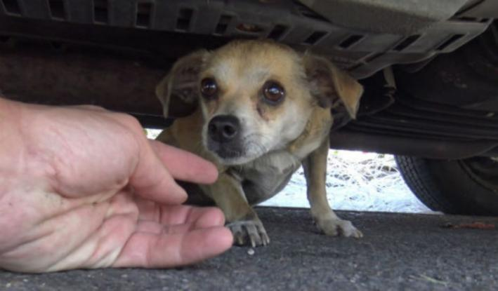Αυτό το σκυλάκι είχε χαθεί για 5 μέρες – Δείτε τη συγκινητική στιγμή της επανένωσής του με τον ιδιοκτήτη του