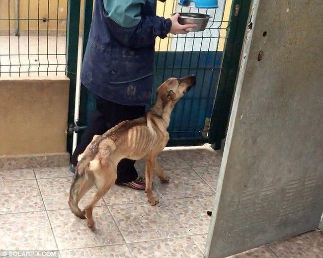 starved-puppy-9