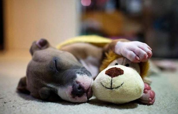 Ποιον βλέπει στον ύπνο του ο σκύλος σου;