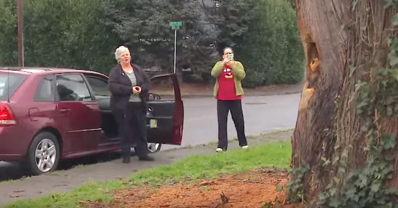 Ο δήμος της ζήτησε να κόψει το 110 ετών δέντρο έξω από τη σπίτι της, όμως ένας άγνωστος τη βοήθησε να το μετατρέψει σε ξύλινο αριστούργημα.
