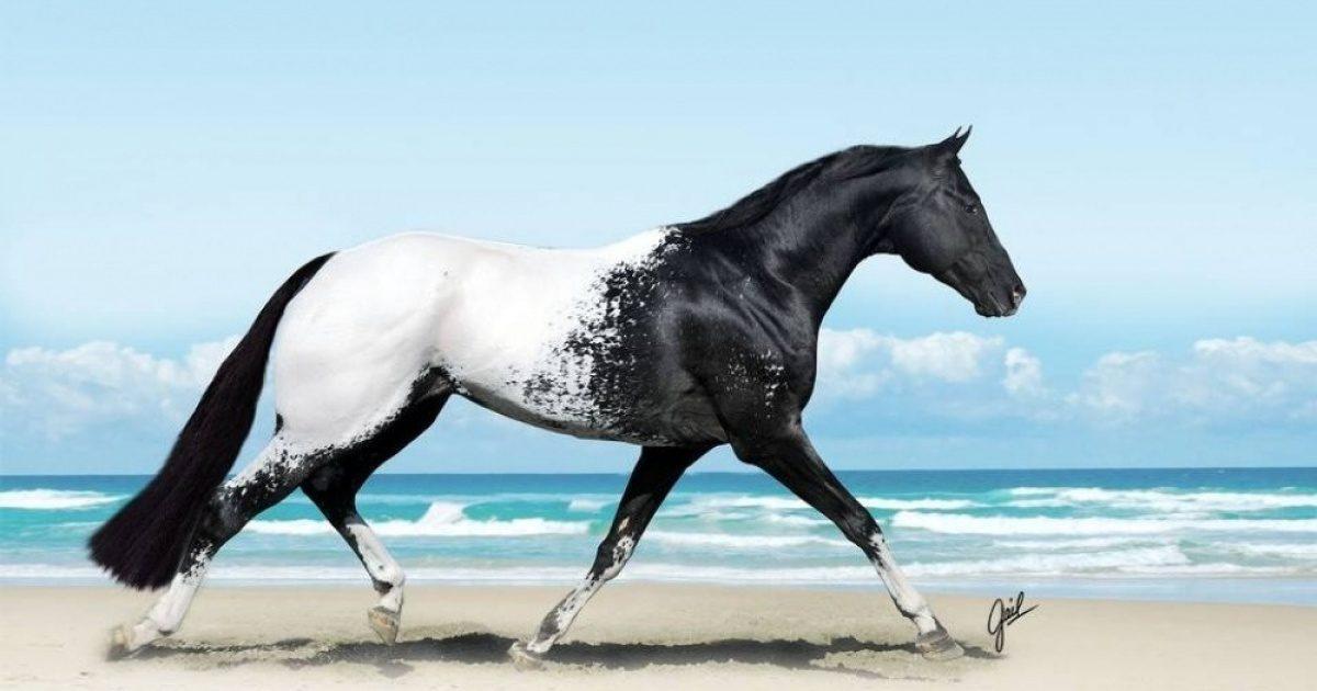 40 φωτογραφίες που δείχνουν την εξωπραγματική ομορφιά τον άλογων