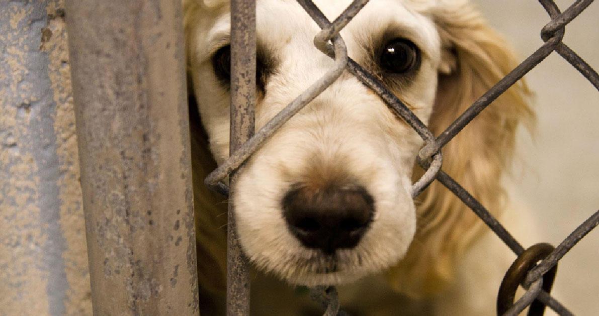 156 συλλήψεις και 950 δικογραφίες για βασανισμό και θανάτωση ζώων το πρώτο 9μηνο του 2016.