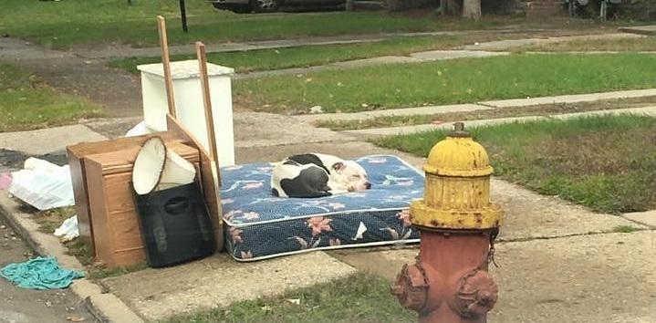 Η Φωτογραφία που μας συγκλόνισε: Κακόμοιρο κουτάβι περιμένει μάταια για ένα μήνα τους ιδιοκτήτες του που το εγκατέλειψαν