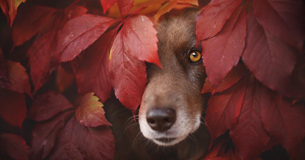 Φωτογράφος δημιουργεί αριστουργηματικά πορτρέτα με σκύλους που απολαμβάνουν το φθινόπωρο