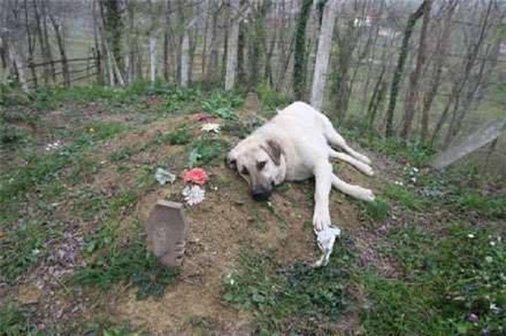 Σκύλος επισκέπτεται τον τάφο του ιδιοκτήτη του κάθε μέρα και δείχνει τι σημαίνει «αγάπη δίχως όρους»