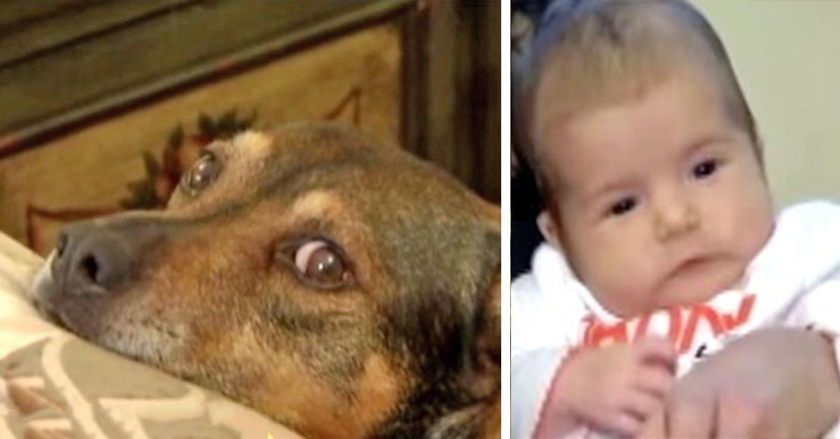 Σκυλί πηδάει στο κρεβάτι της μητέρας και την οδηγεί στο μωρό της που έχει σταματήσει να αναπνέει.