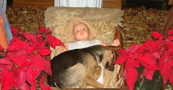 Όλοι έχουν ανάγκη λίγη αγάπη: Οι συγκλονιστικές φωτογραφίες ενός αδέσποτου σκύλου αγκαλιά με τον μικρό Χριστούλη στη Φάτνη