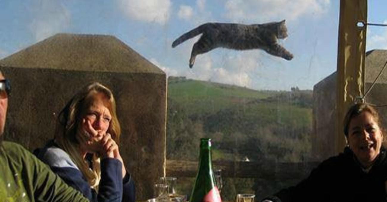 16 φωτογραφίες με γάτες που λήφθηκαν την κατάλληλη στιγμή