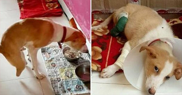 Άρρωστος τύπος «ακρωτηρίασε» τα πίσω πόδια ενός σκύλου στην προσπάθεια του να γίνει «Κτηνίατρος»!