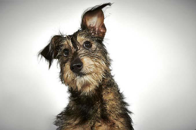 Φωτογράφος μόδας βοηθάει εγκαταλελειμμένους σκύλους να βρουν οικογένεια