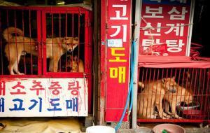 dog-meat-market-shut-down-south-korea-4-1200x6301200630