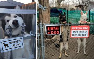 hilarious_beware_of_dog_signs_featured