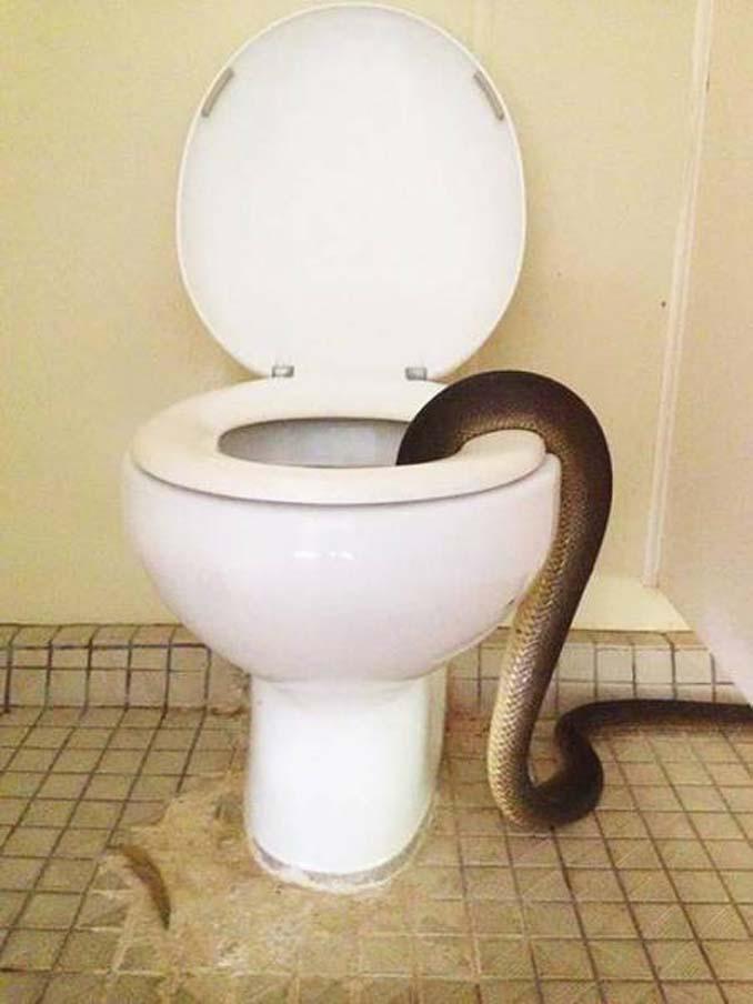 Στην Αυστραλία μία επίσκεψη στην τουαλέτα μπορεί να αποδειχτεί εφιαλτική εμπειρία (2)