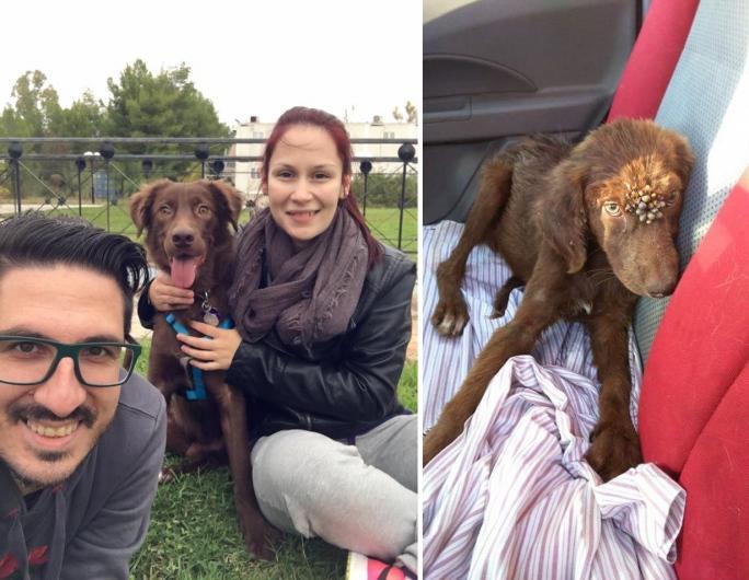 Στη νέα του οικογένεια ο σκυλάκος που βρέθηκε με εκατοντάδες τσιμπούρια στην Κινέτα Αττικής