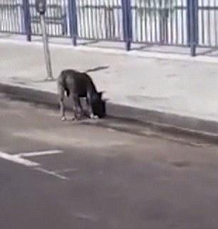 The man filming the video found the believed owner of the pit bull