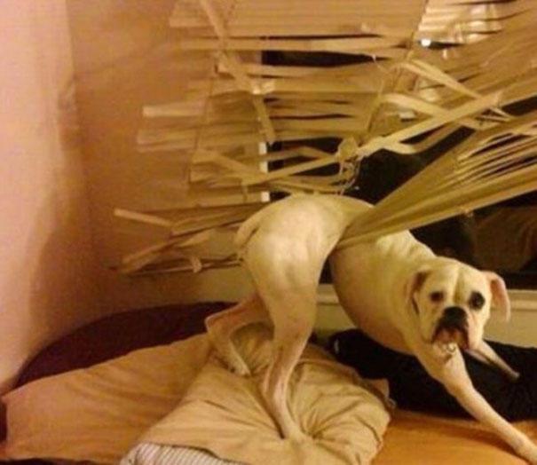 40 σκύλοι σε απίθανες καταστάσεις που θα σας κάνουν να γελάσετε