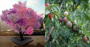 This-Crazy-Tree-Grows-40-Kinds-of-Fruit [1200x630]1200630