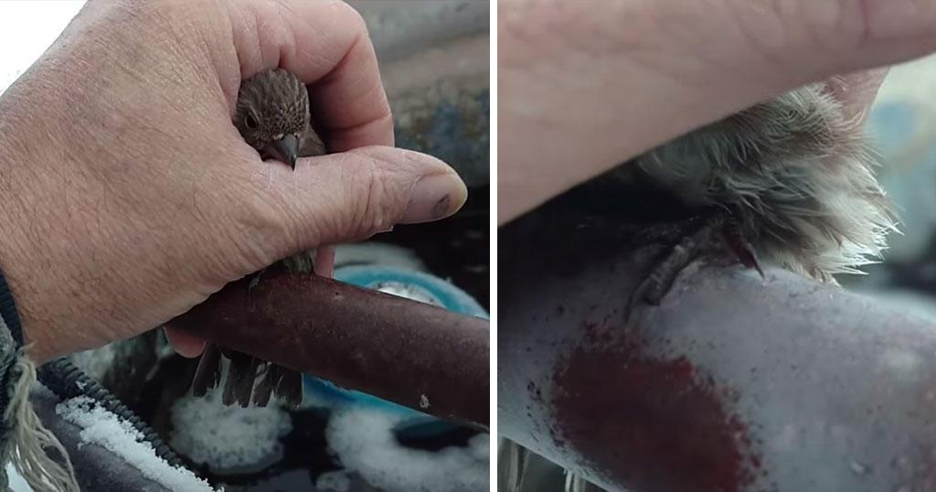 Ηλικιωμένος άνδρας έσωσε παγωμένο σπουργίτι με την ζεστή του ανάσα
