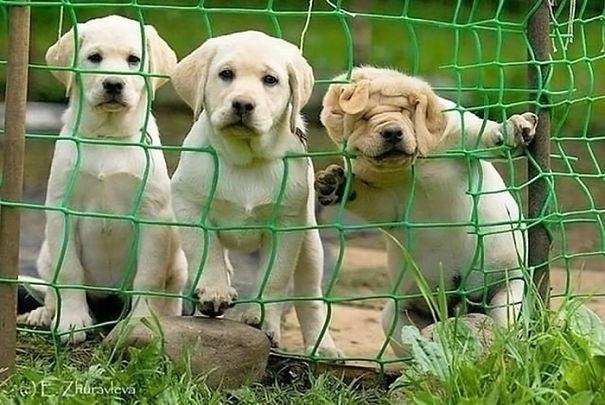 dog-fails-11-risegr