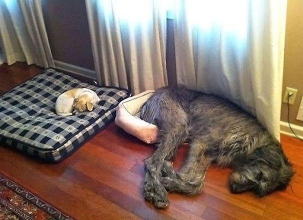 dog-fails-12-risegr