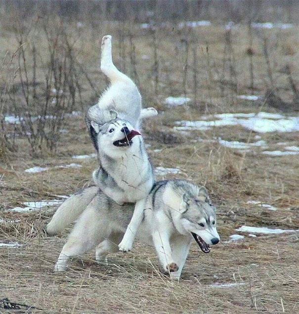 dog-fails-7-risegr