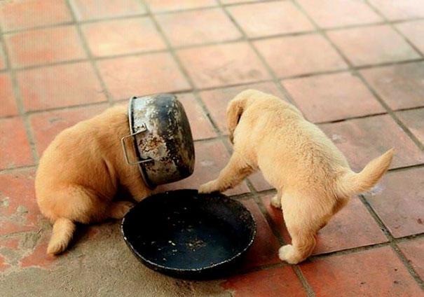 dog-fails-9-risegr