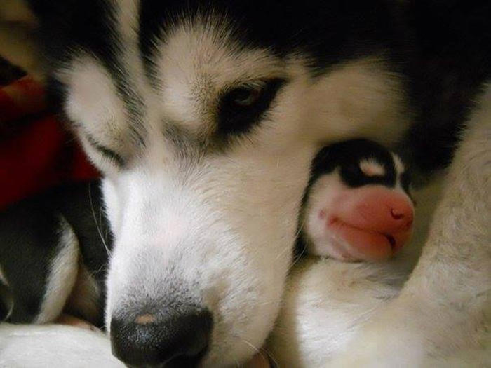 dogs-and-puppies-21__700