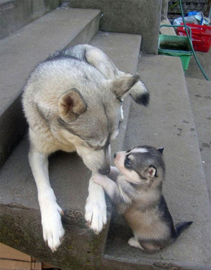 dogs-and-puppies-37__700