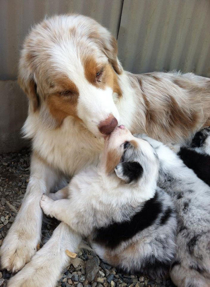 dogs-and-puppies-5__700