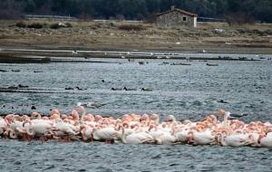 flamingo1-1200x6301200630