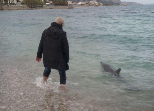 Δύο πολίτες στη Χίο βούτηξαν στη θάλασσα και έσωσαν μικρό τραυματισμένο δελφίνι