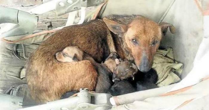 Συγκλονιστικό! Αδέσποτη σκυλίτσα θήλαζε ΑΝΘΡΩΠΙΝΟ νεογέννητο μωρό που πέταξε στα σκουπίδια η μαμά του