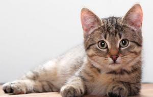 interesting-cute-cat-wallpaper-coda-craven-1134x750