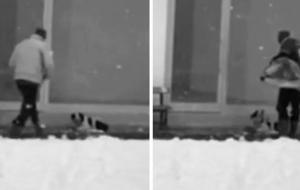 security-camera-man-helps-stray-dog-turkey-coverimage
