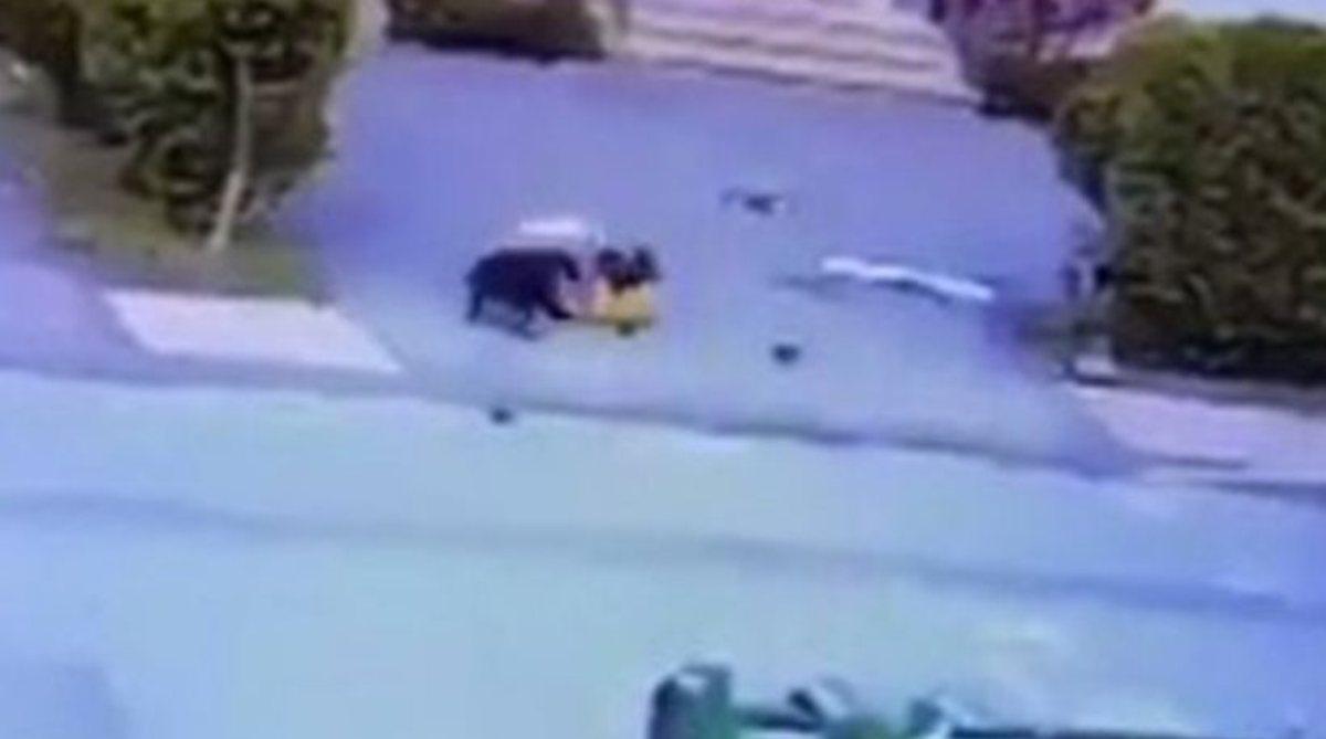 Τρομακτικό: Η στιγμή που εξαγριωμένο σκυλί αρπάζει τρίχρονο παιδάκι από το λαιμό