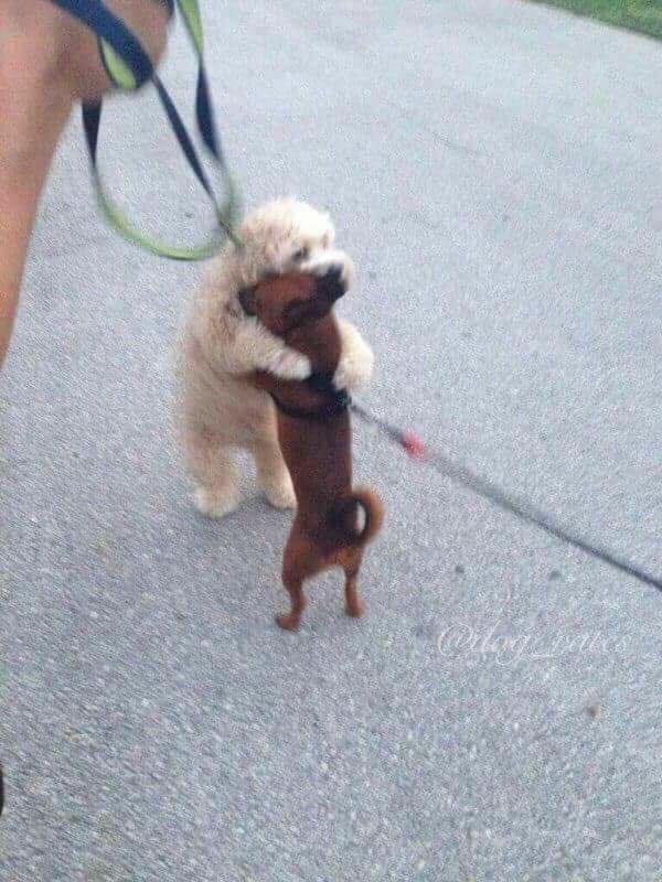 σκυλί-4