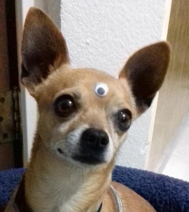 σκυλί-1