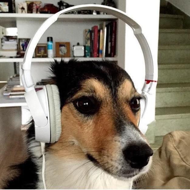 σκυλί-12